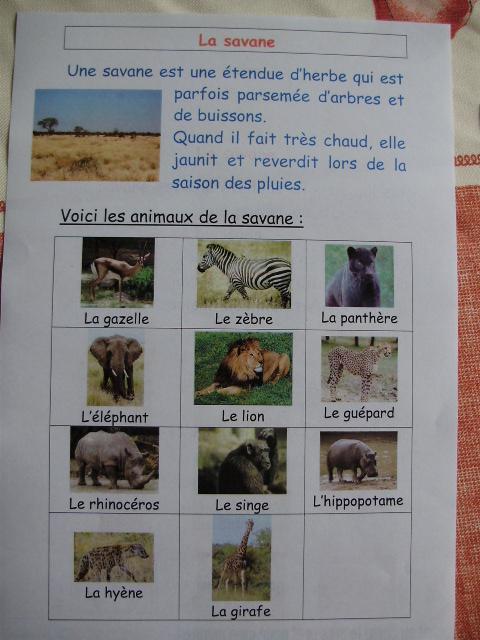 Canghai /Él/éphant Arrosoir pour enfants Motif animaux Vert