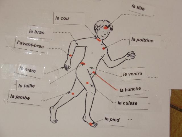 Top partie du corps humain en anglais wallpapers for Interieur du corps humain photo