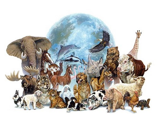 image-animaux.jpg